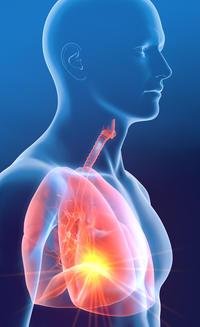 menschlicher Torso in 3D mit rot markierter Lunge