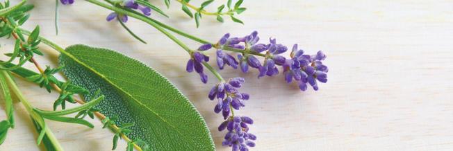 Lavendel, Salbei, Rosmarin und Thymian