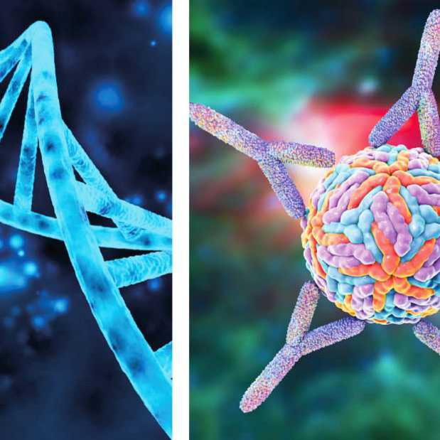 3D-Grafik DNA und Antikörper
