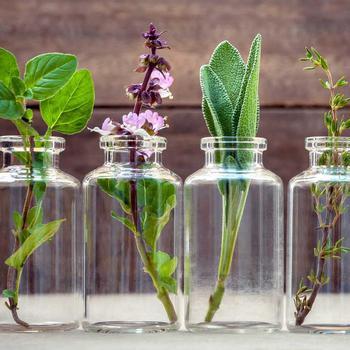 Aroma-Pflanzen in Glasgefäßen