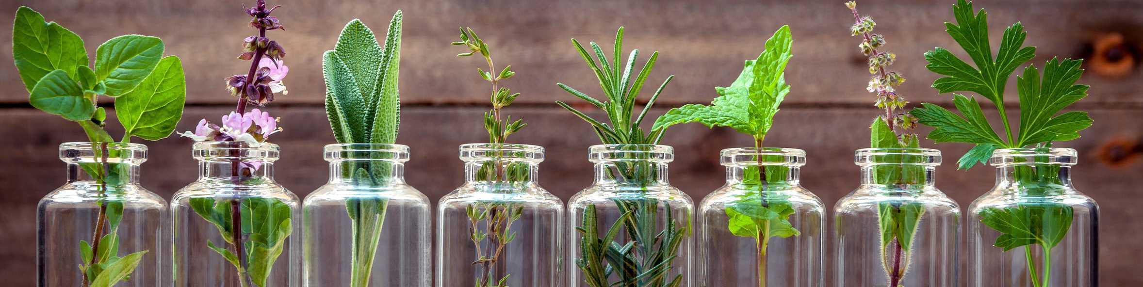 Gläser mit Kräutern die ätherische Öle enthalten
