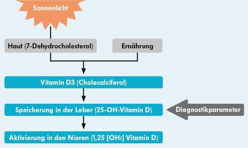 Schaubild: Vitamin D durch Sonnenlicht