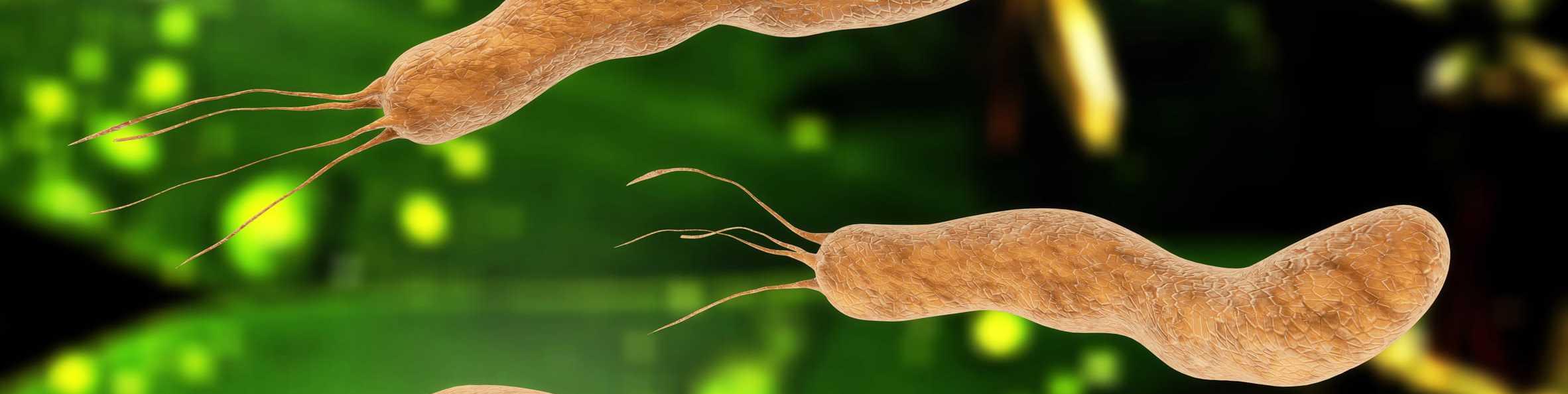 Bakterien, Helicobacter